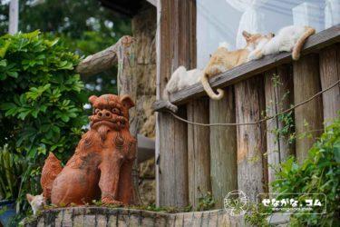 まるで猫温泉!「ねこ専」で沖縄猫写真を楽しんだらシーサー