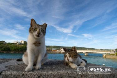 猫写真展示されます!【ワンダフルにゃんず2020 in 大丸須磨店】兵庫県